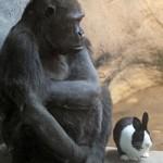 Una gorila y un conejo se hacen buenos amigos en el zoo