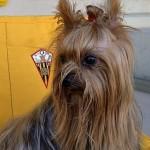 El socio 1.600 del equipo de fútbol de Lepe es un perro