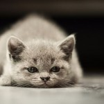 Las 10 travesuras y manías que todo gato normal debe tener