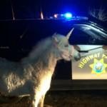 Capturan a un unicornio tras tres horas de persecución