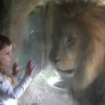 La inesperada reacción de un león ante el beso de una niña