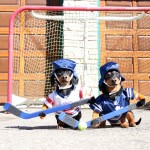 El vídeo de dos perros jugando al hockey que arrasa en la Red