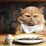 ¿Sabías que los gatos comen generalmente solo por el centro del plato?