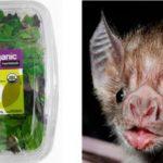 Compran una ensalada y se encuentran un murciélago muerto dentro