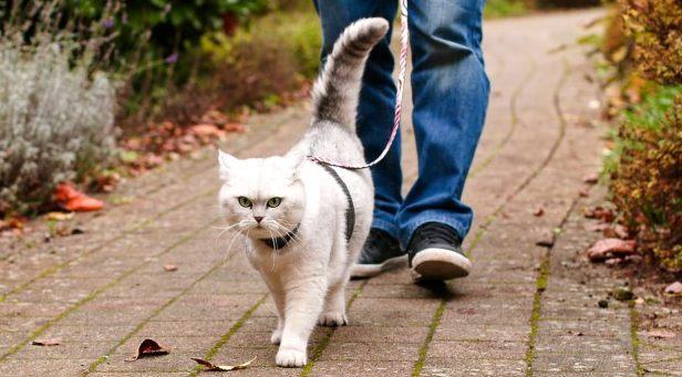gato2_recortada