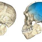 Hallan en Marruecos los restos más antiguos del Homo Sapiens