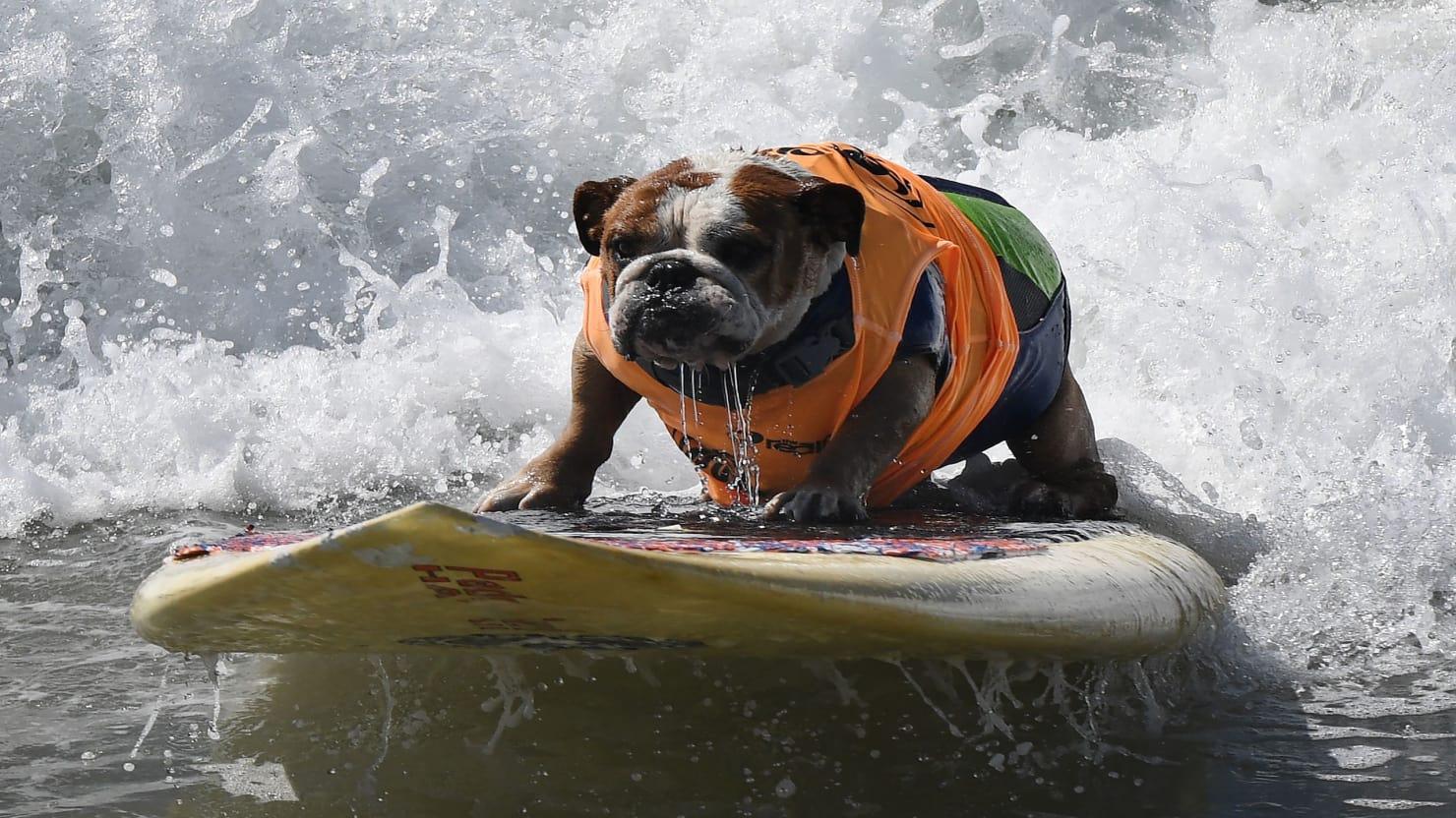 surf_2016