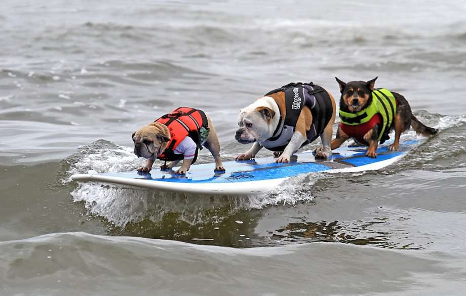 surf_varios
