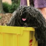 Los mejores disfraces de perros para Halloween