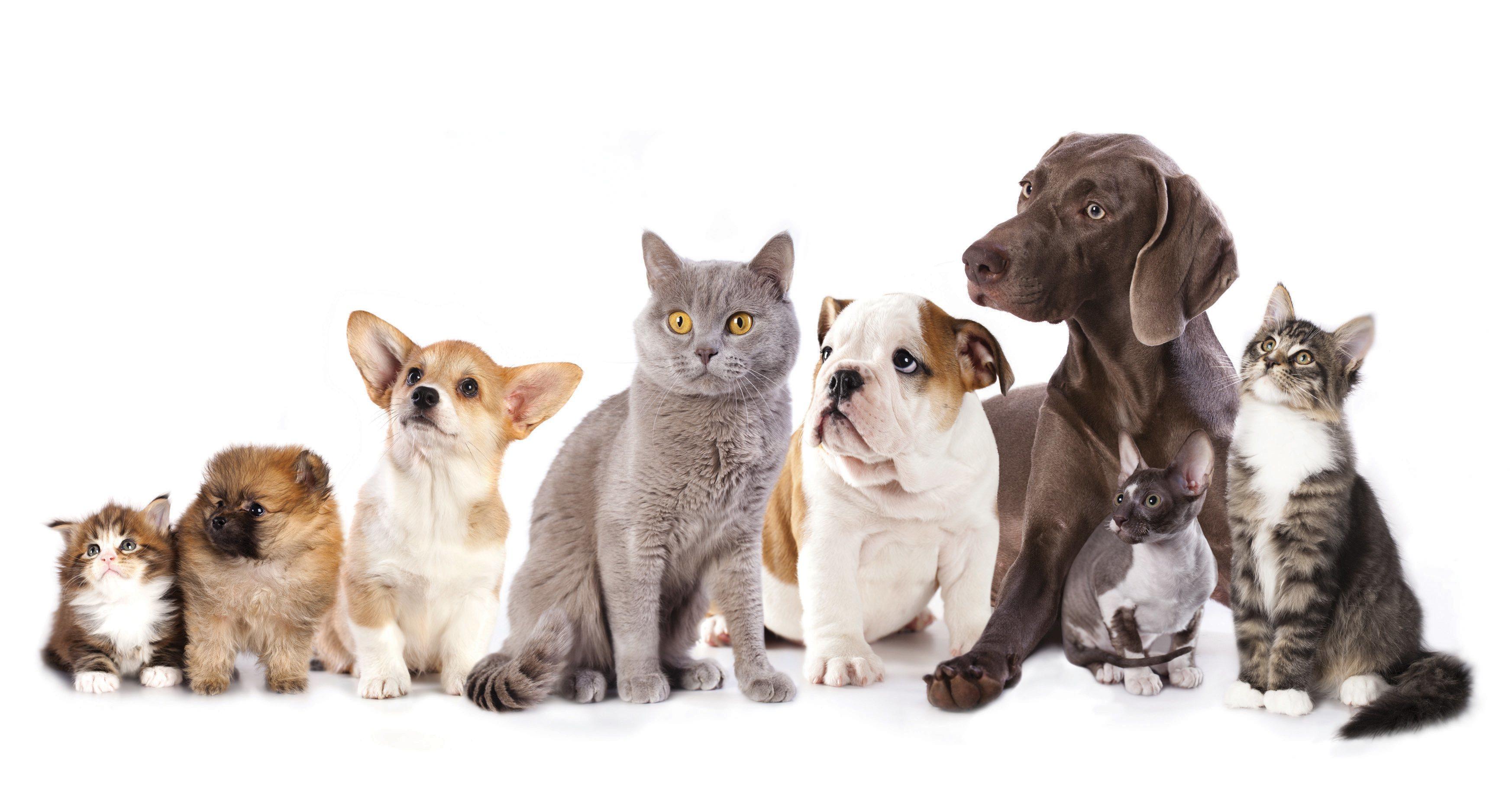 perros_gatos