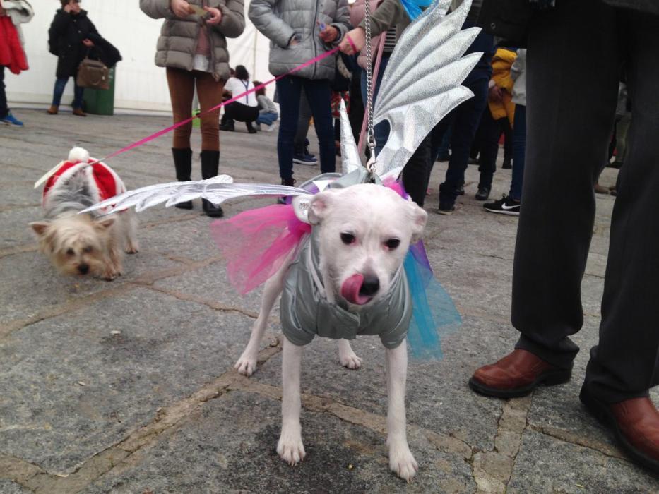 Este año las mascotas han formado parte del carnaval - lavozdezamora